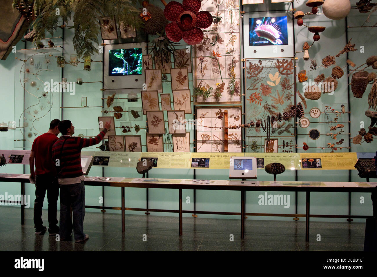 Two visitors to the American Museum of Natural History view natural history exhibit display, New York City, NYC, - Stock Image
