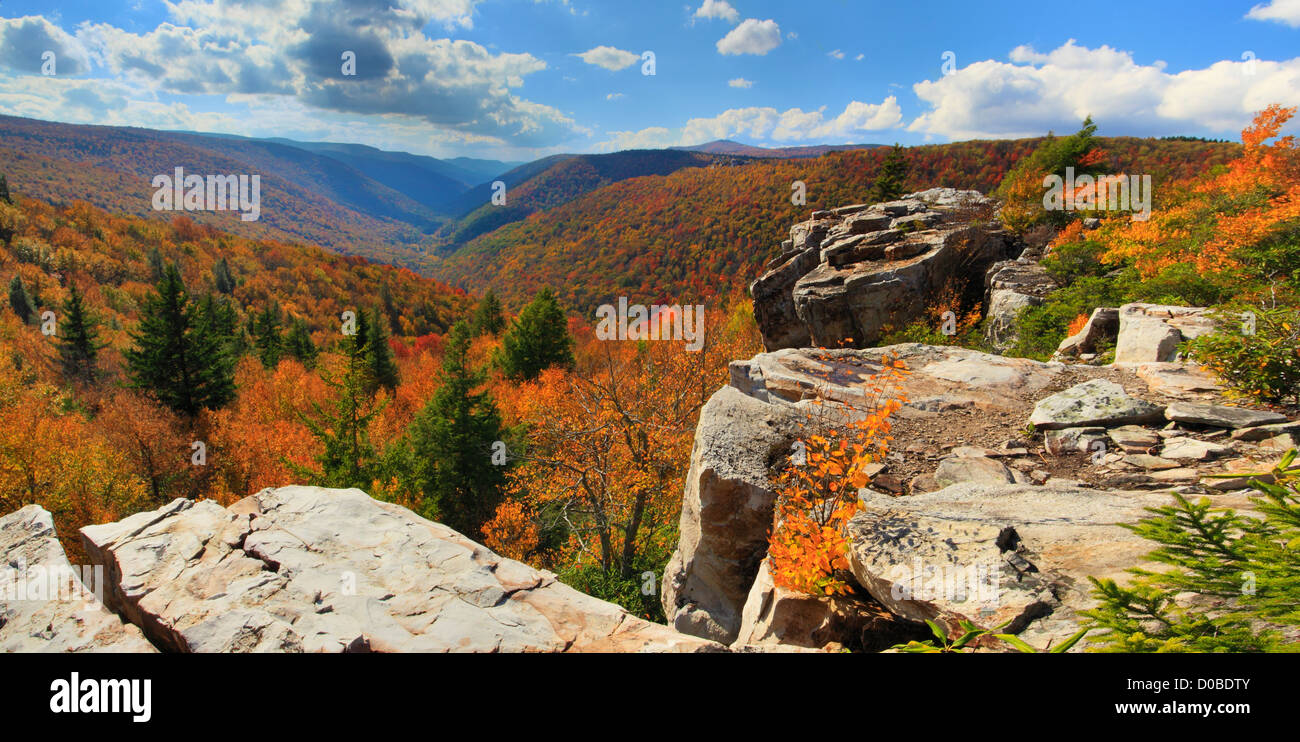 View of Red Creek Canyon from Rohrbaugh Trail, Dolly Sods Wilderness, Hopeville, West Virginia, USA - Stock Image