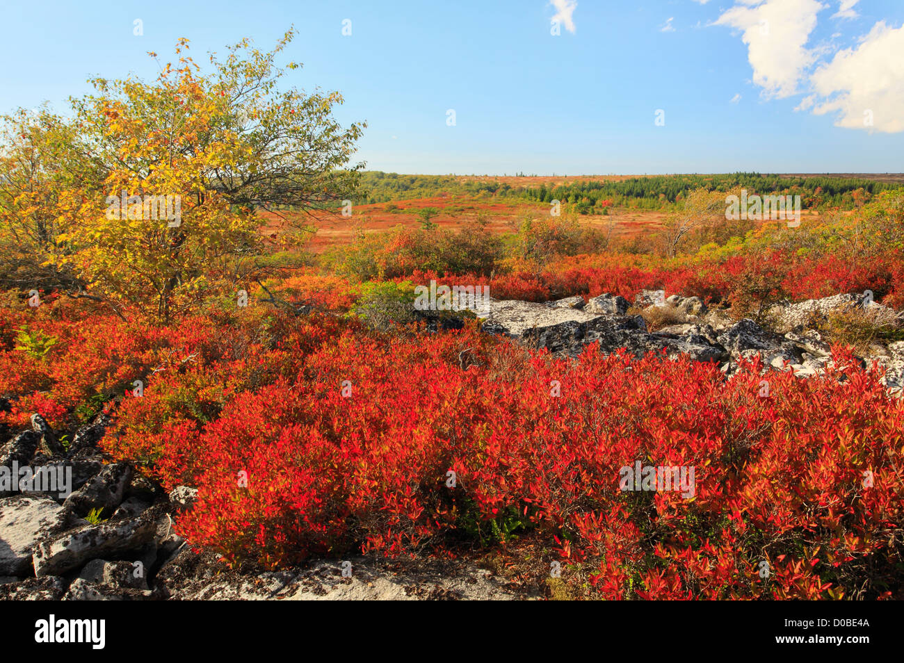 Dolly Sods Wilderness, Hopeville, West Virginia, USA - Stock Image