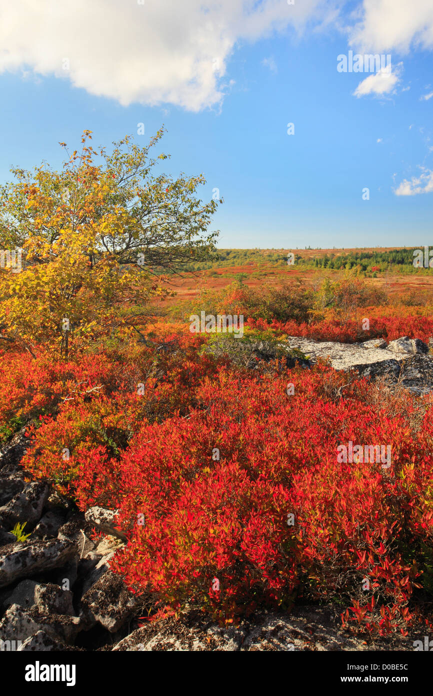 Dolly Sods Wilderness, Hopeville, West Virginia, USA Stock Photo
