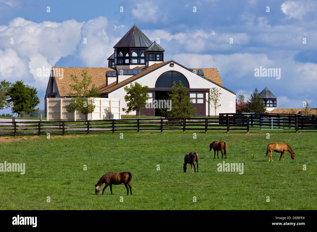 Thoroughbreds Grazing in Paddock at Gainsborough Farm in Woodford County, Kentucky - Stock Image