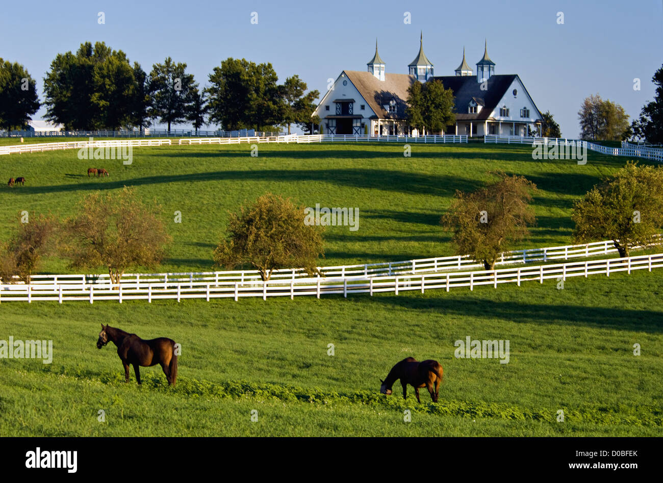 Thoroughbreds Grazing in Paddock at Manchester Farm in Fayette County, Kentucky - Stock Image