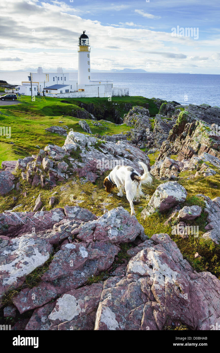 The lighthouse at Rubha Reidh near Gairloch in the Scottish Highlands with a Springer Spaniel dog - Stock Image