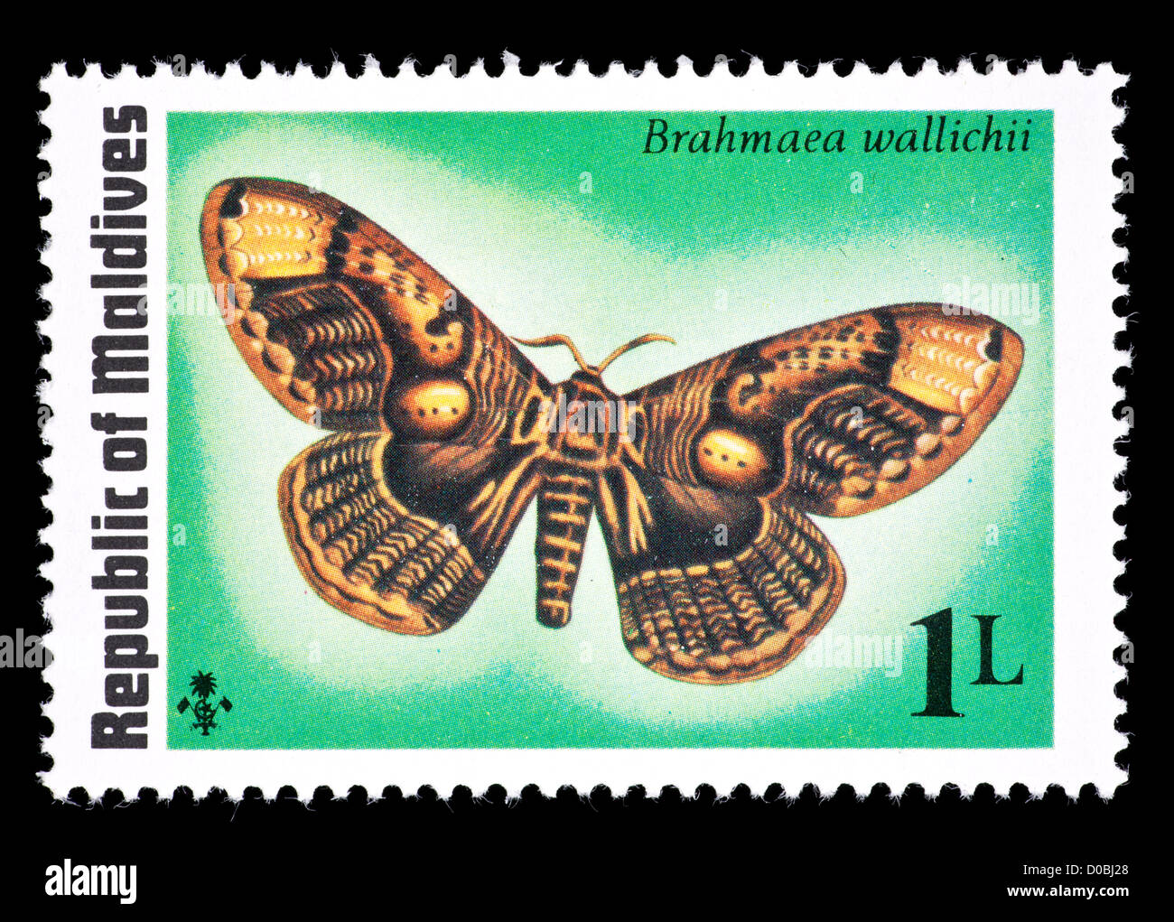 Postage stamp from the Maldive Islands depicting a moth (Brahmaea wallichii) - Stock Image