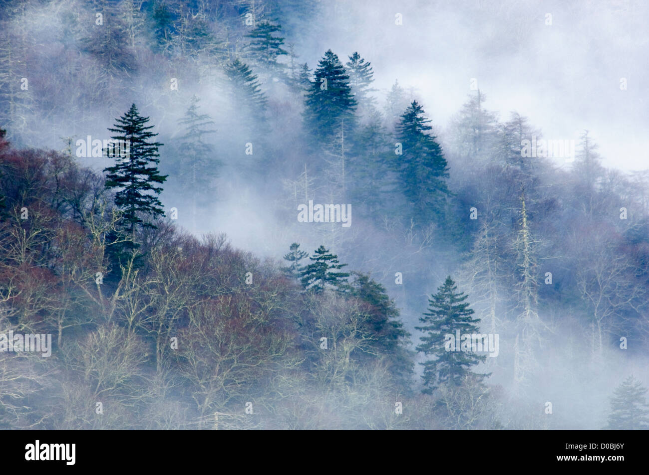 Swirling Mist on Mountainside in the Great Smoky Mountains National Park in Tennessee - Stock Image