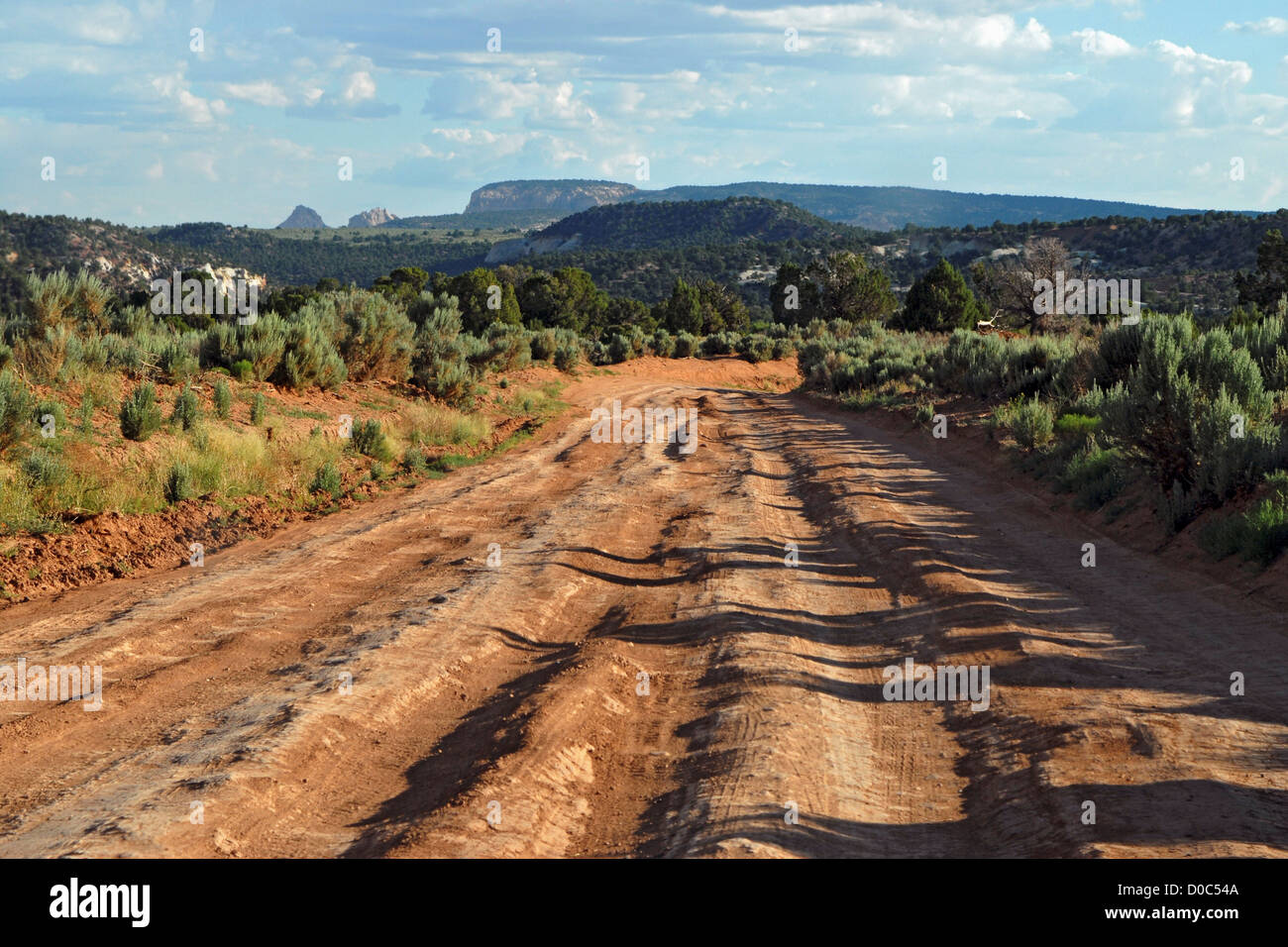 a rutted dirt road in grand staircase escalante national monument