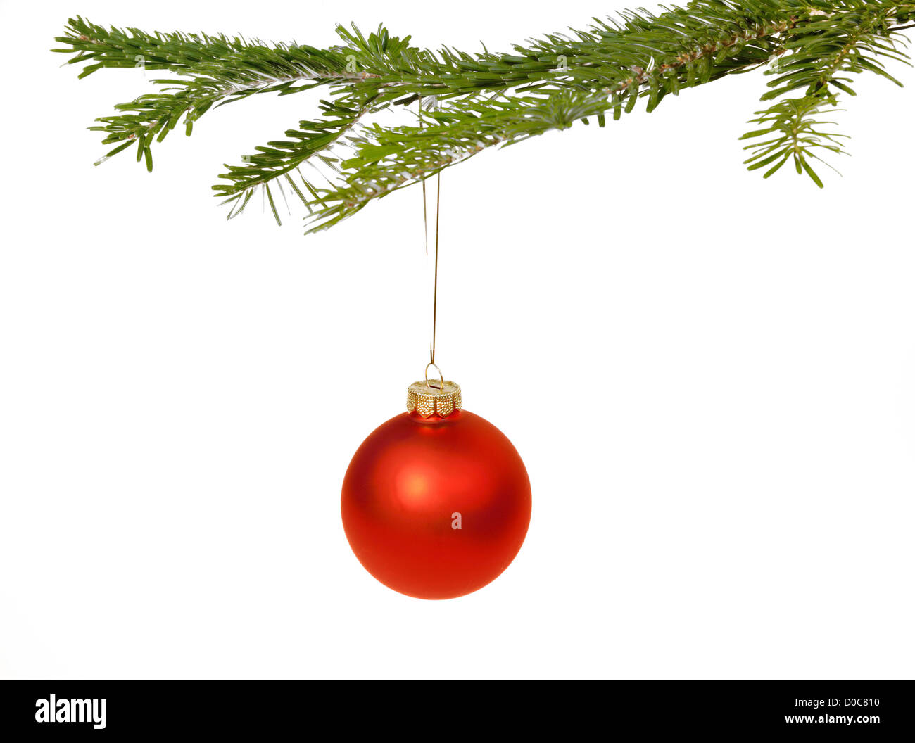 Red Christmas decorations hanging from a pine branch - isolated on white background - Stock Image