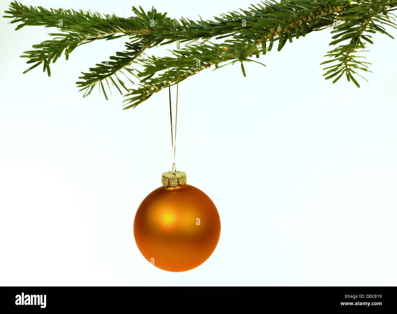 Orange Christmas decorations hanging from a pine branch - isolated on white background - Stock Image