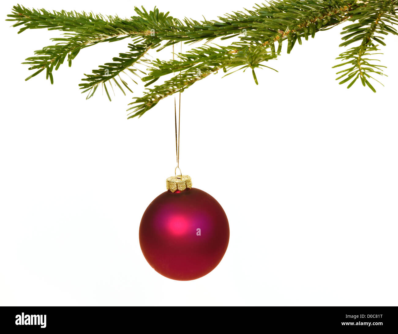 Dark red Christmas decorations hanging from a pine branch - isolated on white background - Stock Image