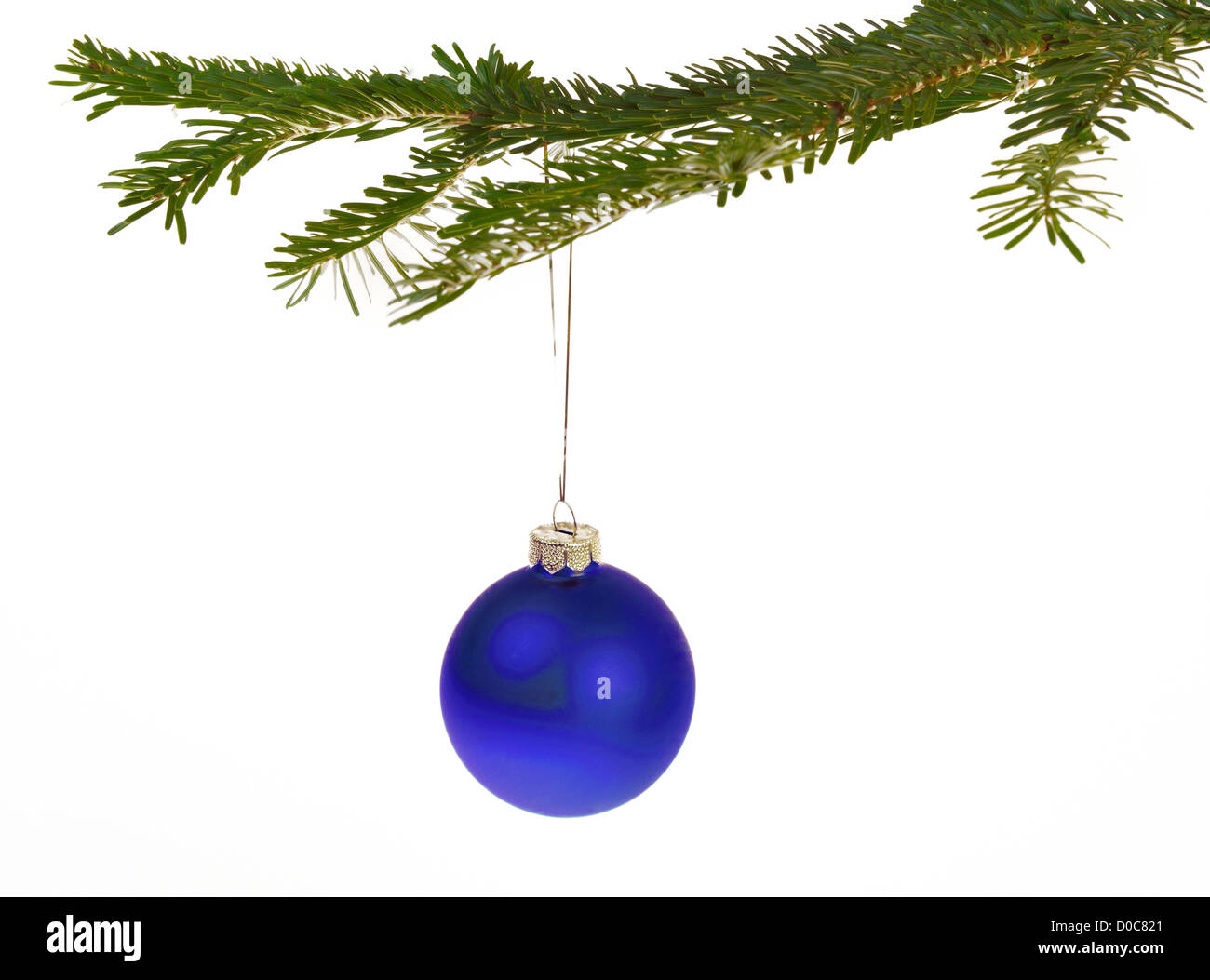 Blue Christmas decorations hanging from a pine branch - isolated on white background - Stock Image