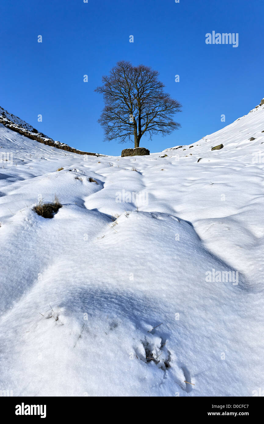 A lone tree at Sycamore Gap on Hadrian's Wall in deep winter snow Stock Photo