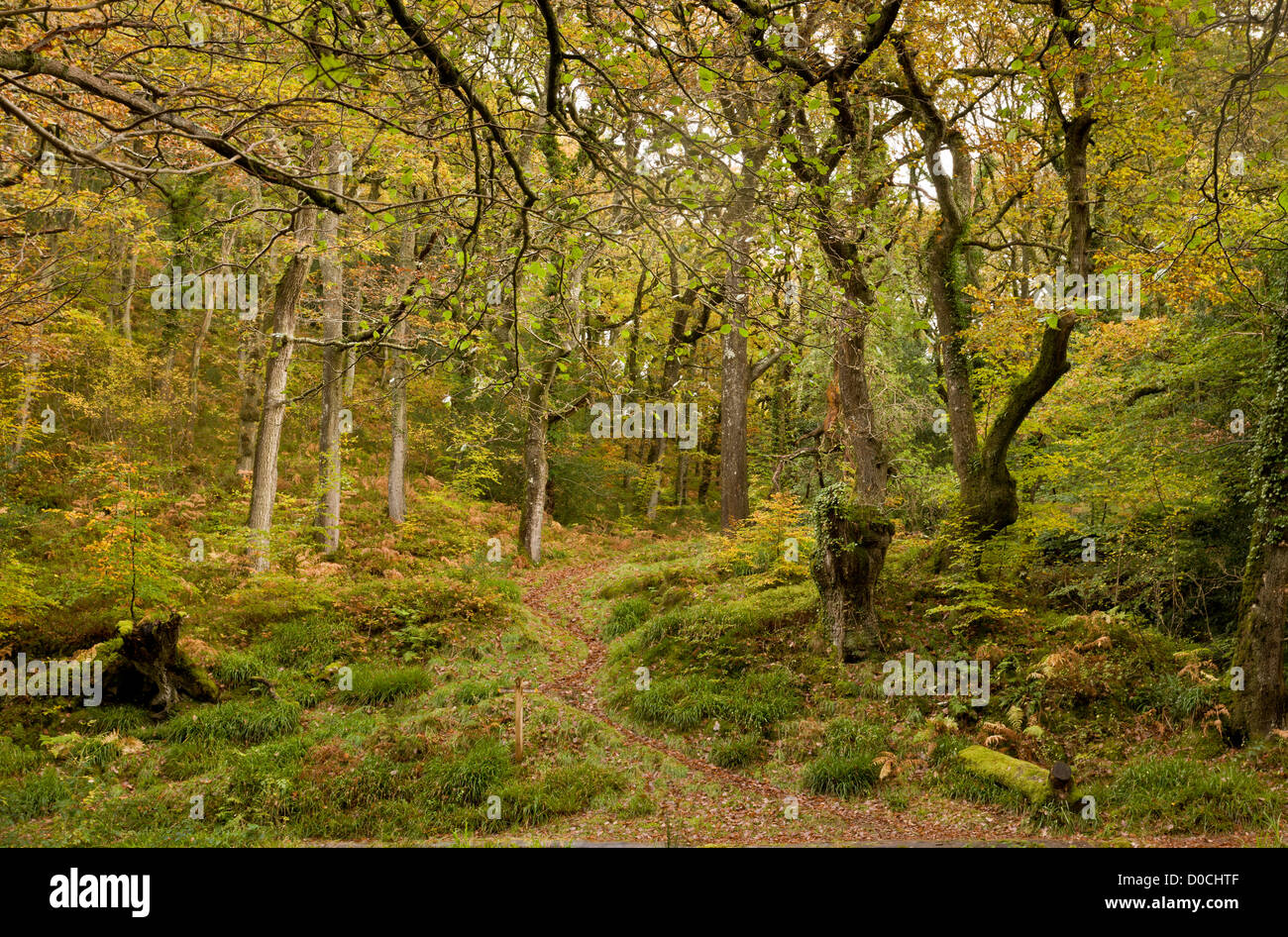 Footpaths in the East Lyn valley above Watersmeet, Exmoor National Park, Devon, England, UK - Stock Image