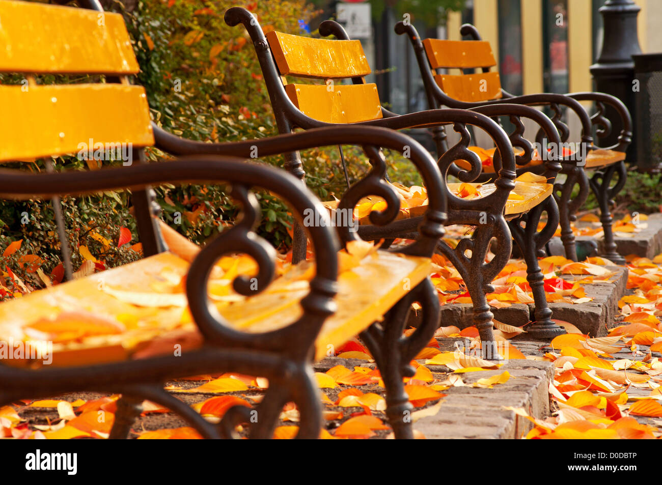 Autumn mood with benches in park - Stock Image