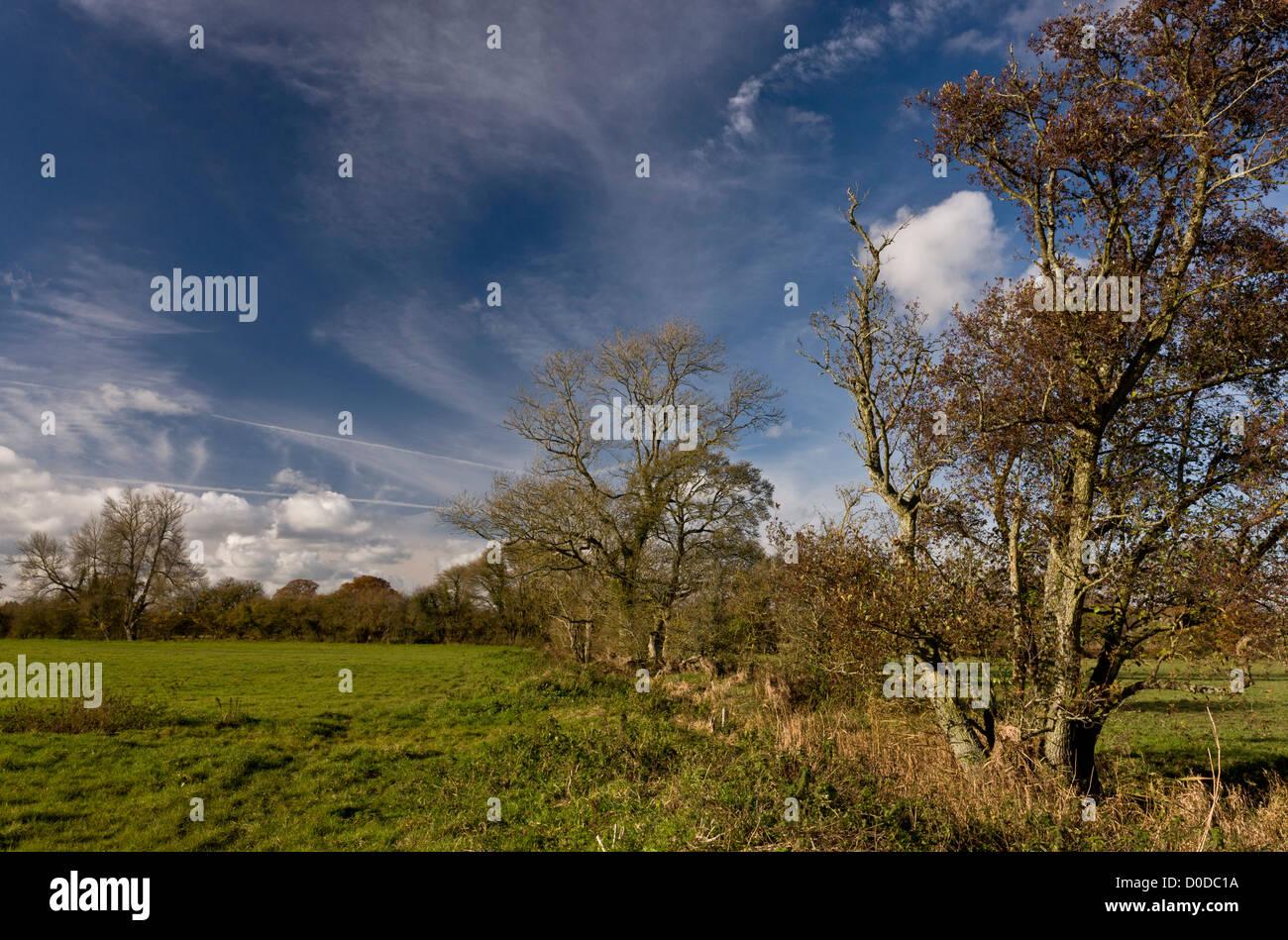 Stour Valley floodplain at Fiddleford, with alder, ash, and black poplar trees,  Dorset, England, UK - Stock Image