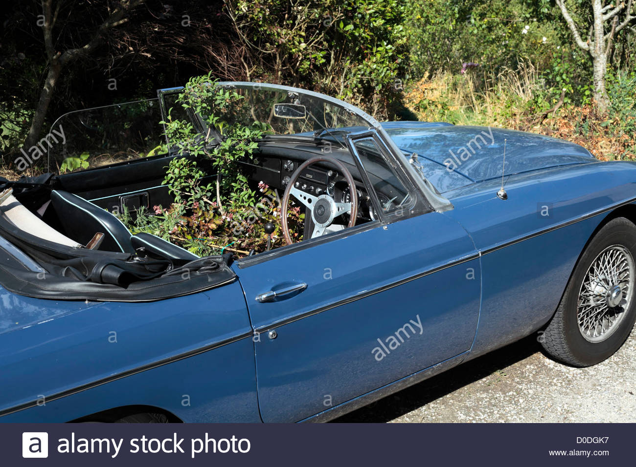MG sports car with plants growing inside - Stock Image