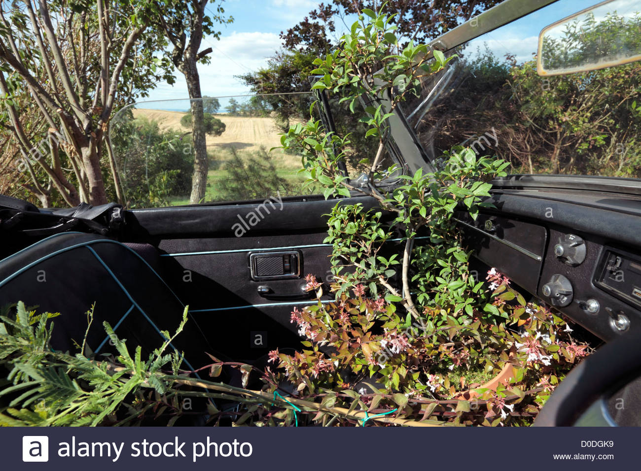 MG sports car with plants inside - Stock Image