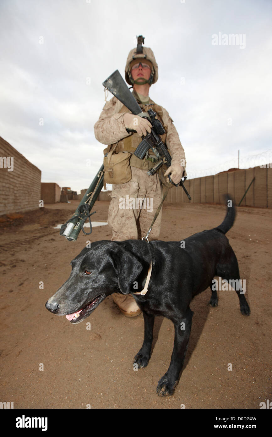 United States Marine and military working dog during a combat operation in Afghanistan's Helmand Province Stock Photo