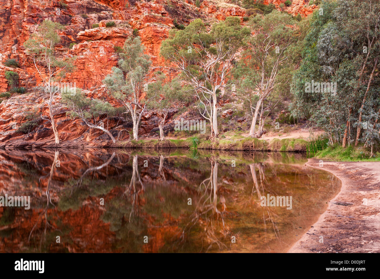 Ghost gum reflections at Ellery Creek Big Hole, West MacDonnell Ranges at sunset west of Alice Springs in the Red - Stock Image