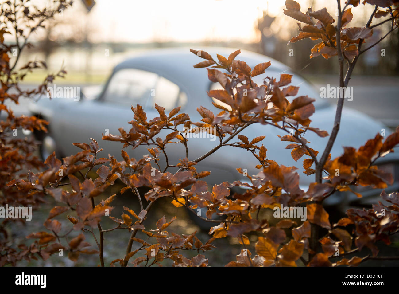 Panhard CD in automn - Stock Image
