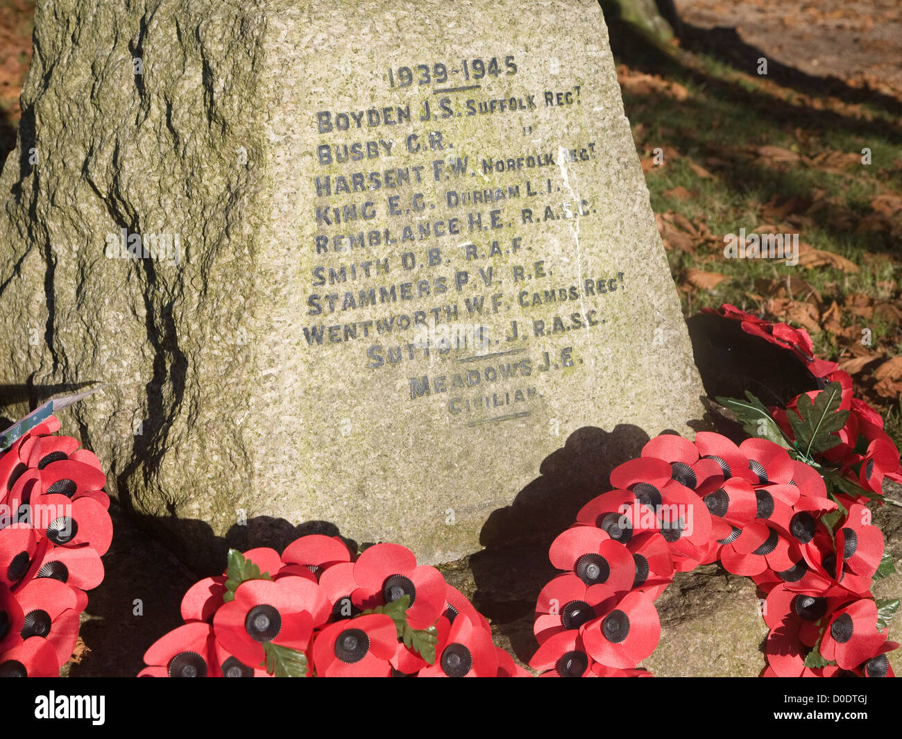 Red remembrance poppy wreaths on village war memorial Reydon, Suffolk, England - Stock Image