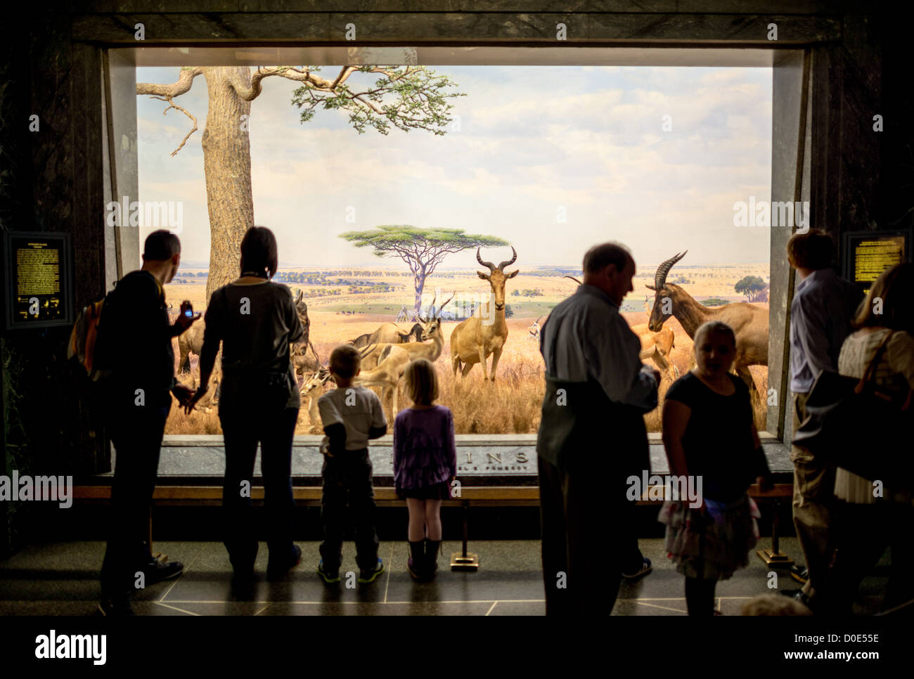 NEW YORK, NY - Serengeti Plains exhibit at the Museum of Natural History in New York's Upper West Side neighborhood, - Stock Image