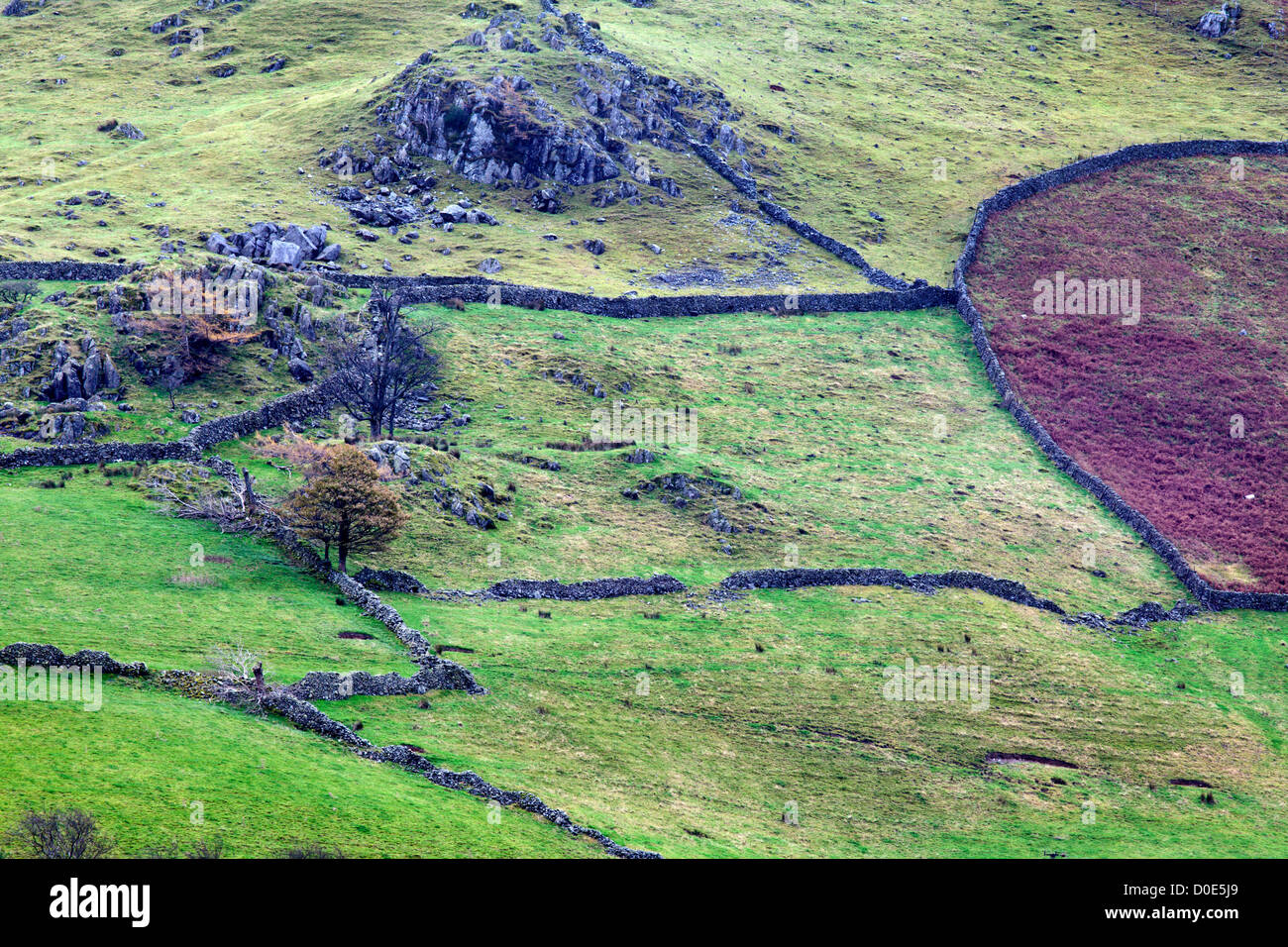 Hartsop Dodd from Brothers Water The Lake District Cumbria England - Stock Image