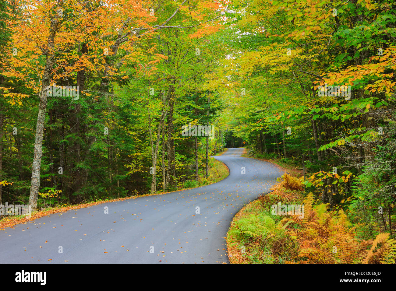 The long and winding road with autumn colors at Acadia N.P, Maine. - Stock Image