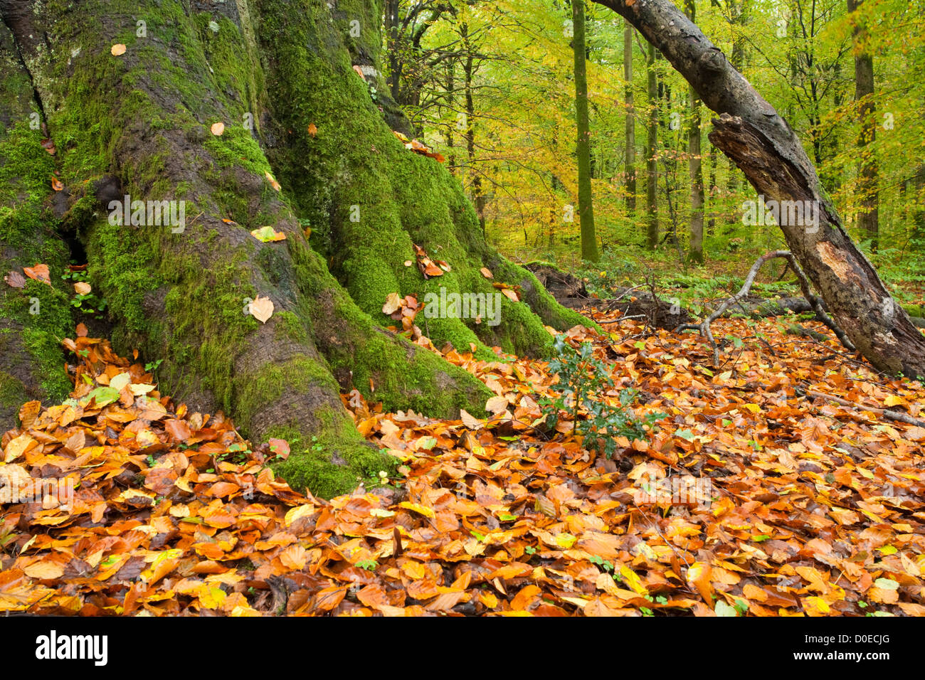 Decaying Wood And Fallen Autumn Leaves On The Forest Floor At