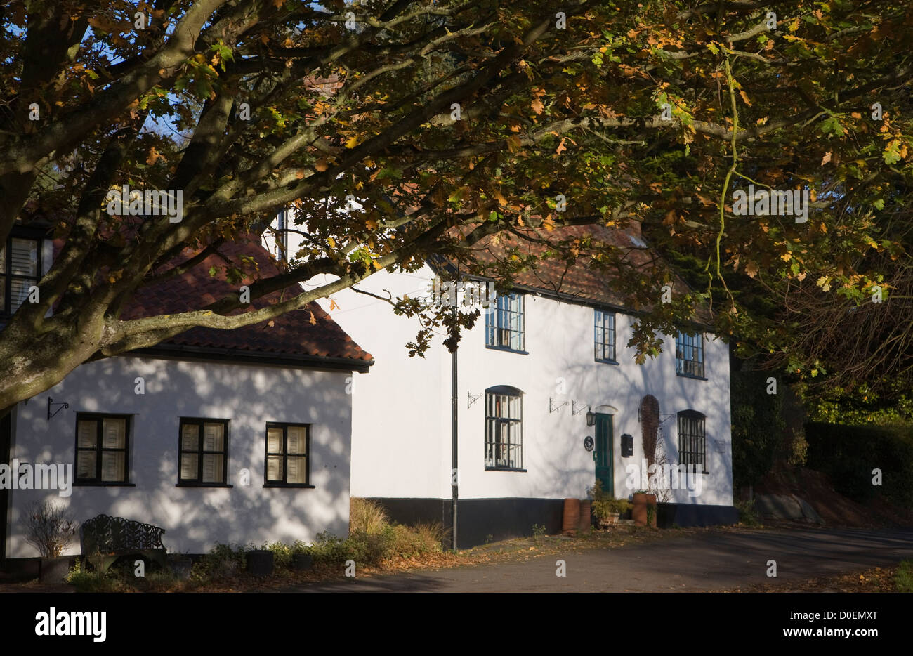 Country cottage autumn leaves Westleton, Suffolk, England - Stock Image
