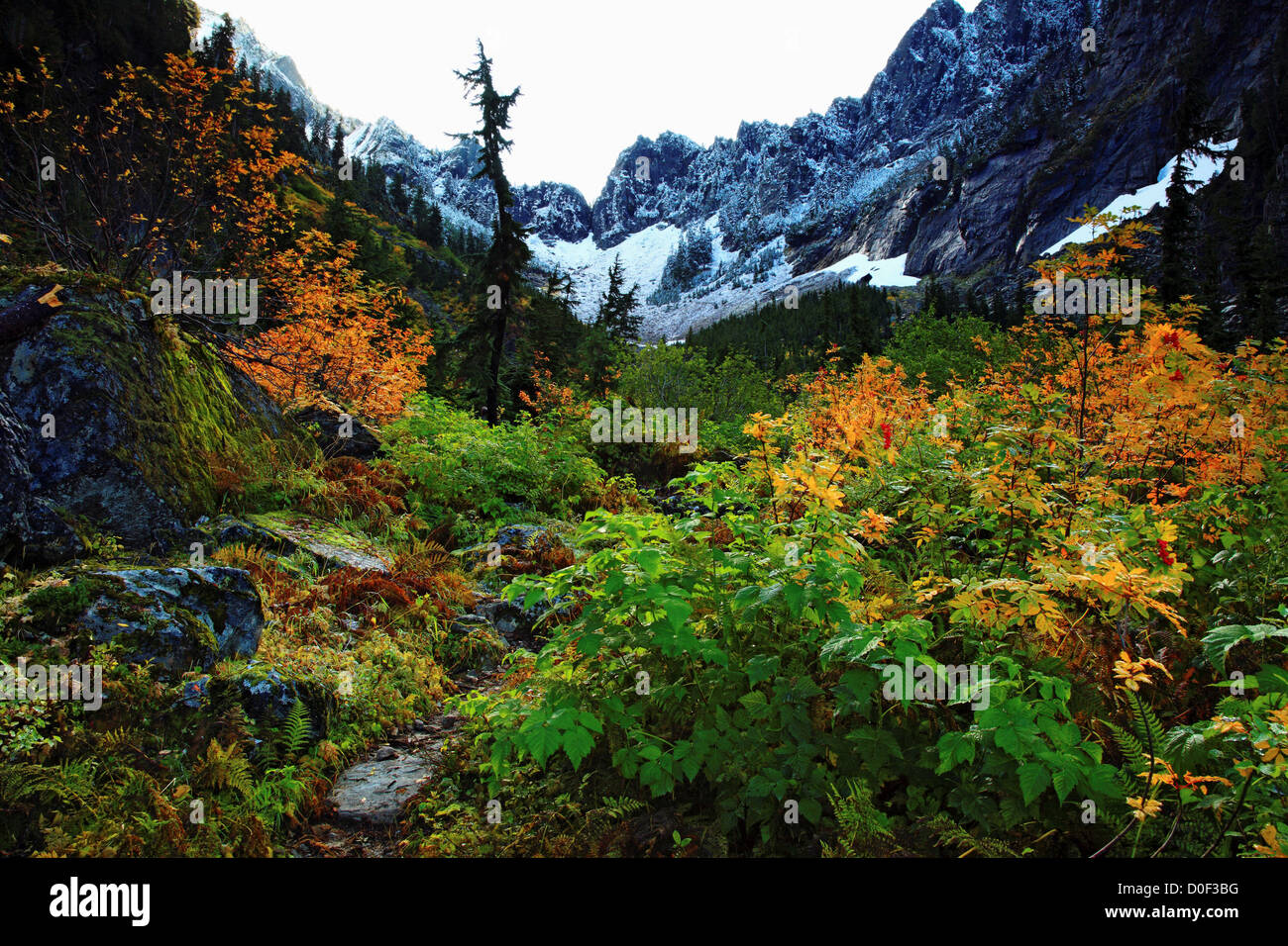 Fall color along Headlee Pass Trail and Wirtz Basin. - Stock Image