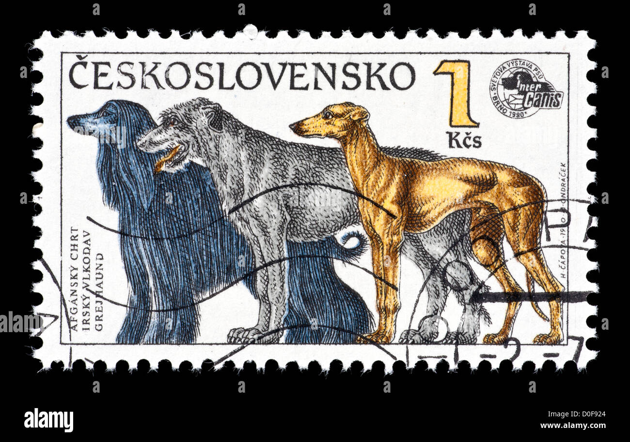 Postage stamp from Cechoslovakia depicting various dogs (Afghan hound, Irish wolfhound, greyhound) Stock Photo