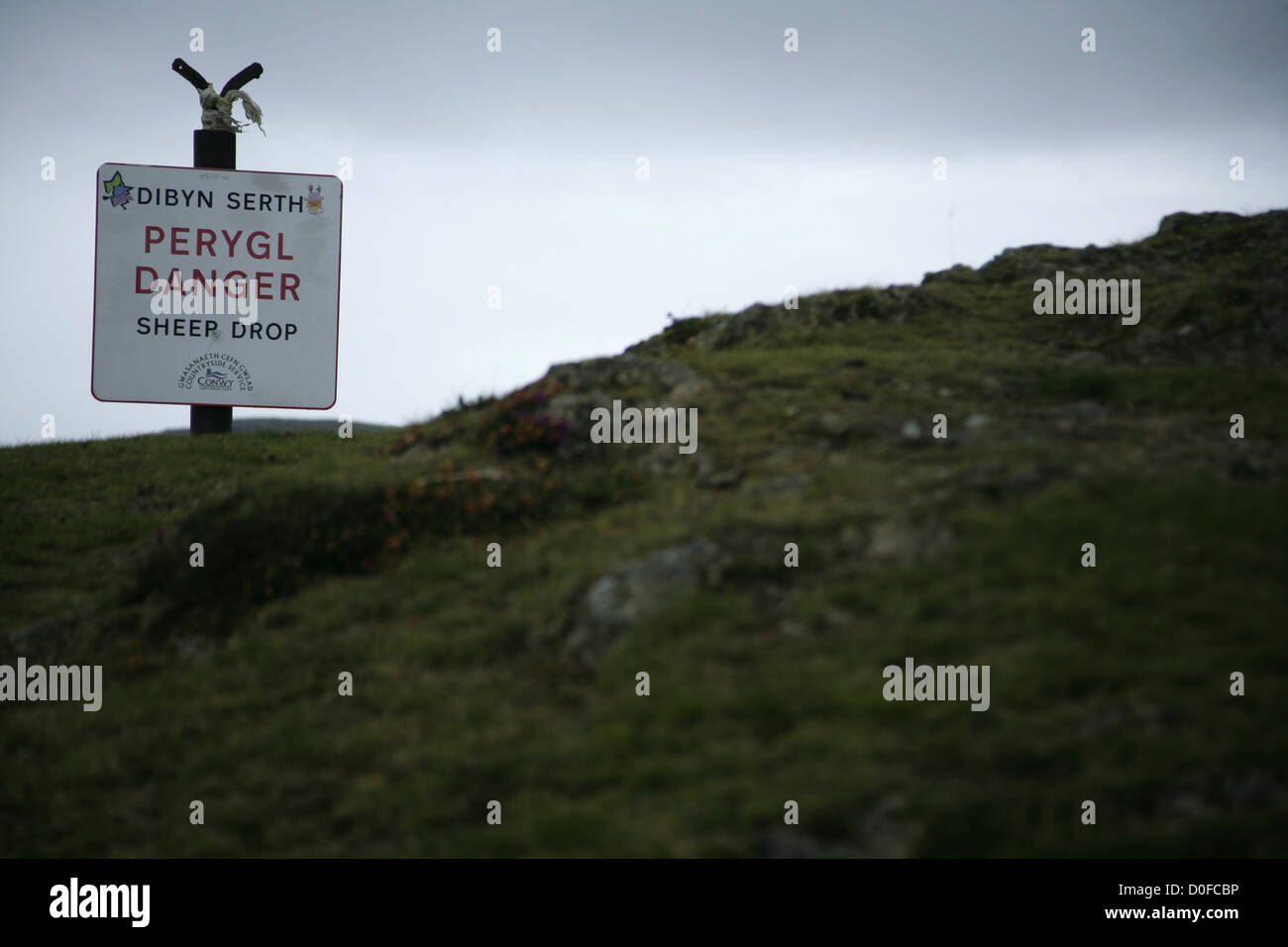 Sheer Drop warning sign changed to 'Sheep Drop' on the summit of Conwy Mountain, North Wales. - Stock Image