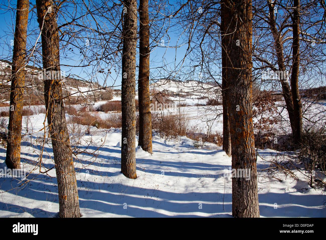 Snowy landscape Burgos province Castile Leon Spain Paisaje nevado provincia de Burgos Castilla León España - Stock Image
