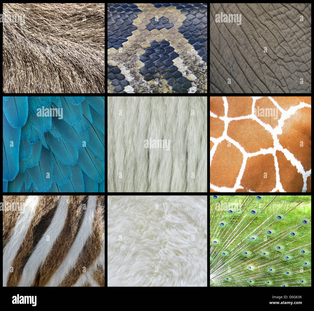 Animal Pattern Texture Of Skin, Fur And Feathers - Stock Image