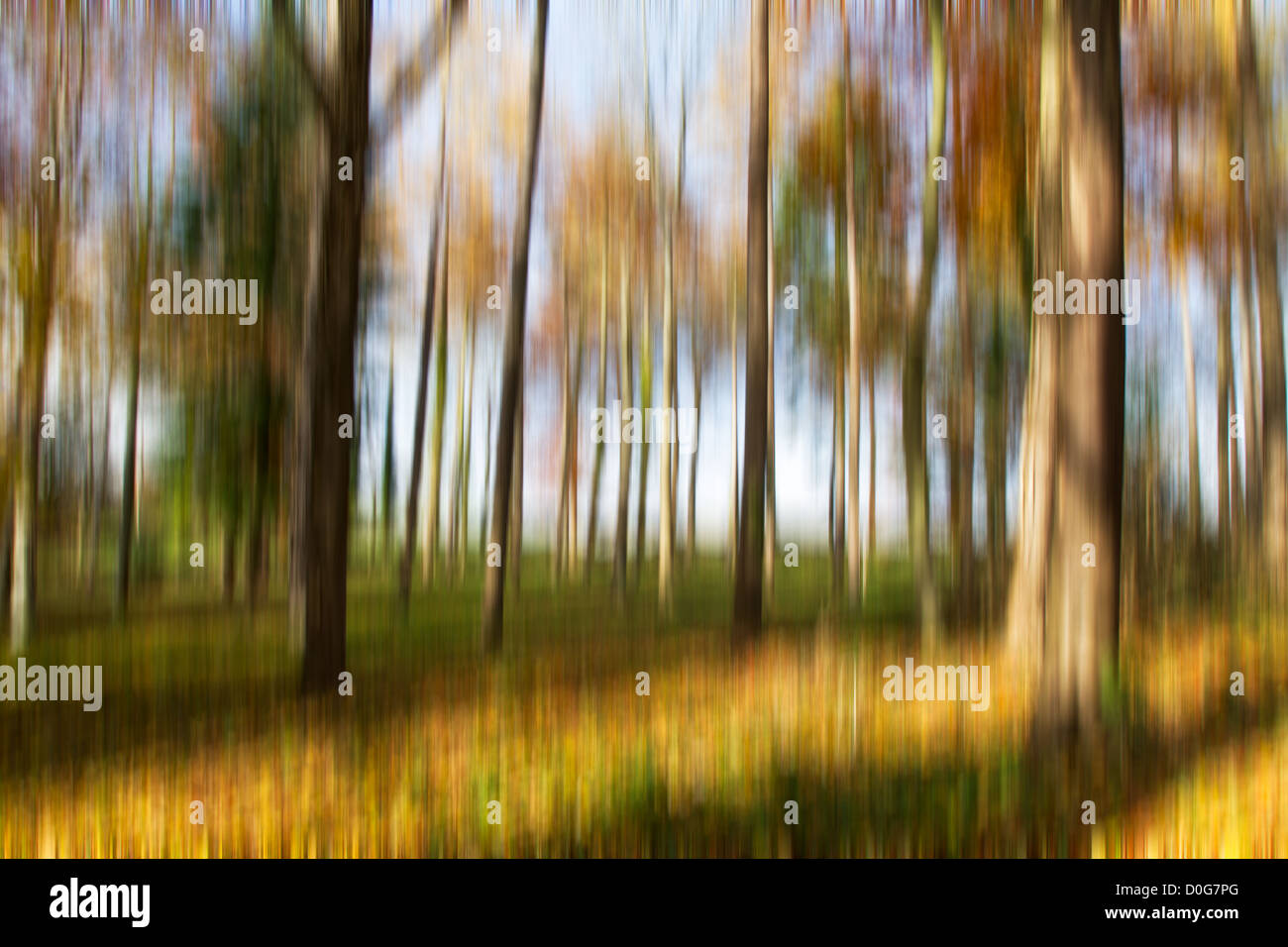 Tree trunks with motion blur with autumn colours - Stock Image