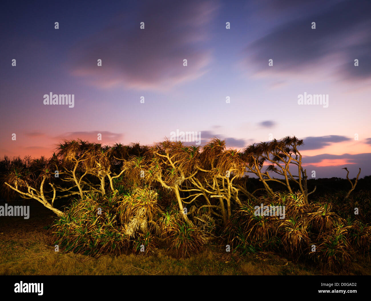 Tropical Plants at dusk in Manzamo, Okinawa - Stock Image