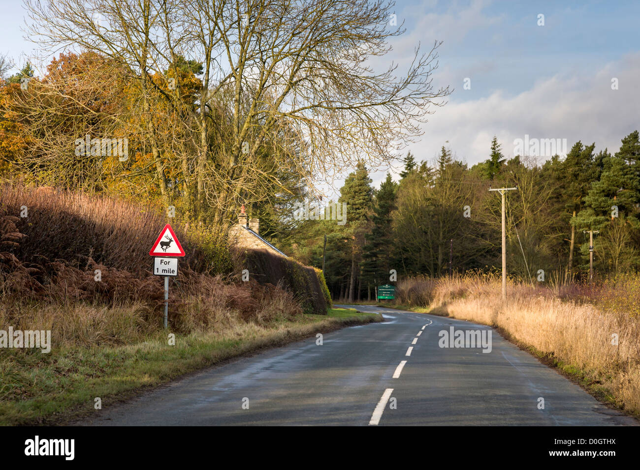 Deer warning sign on a country road. A cold bright afternoon in late Autumn. Moor Lane, Rosedale, North Yorkshire, - Stock Image