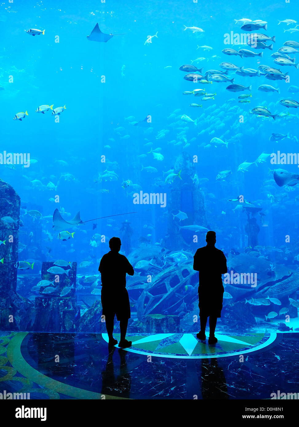 Large Aquarium - People Silhouette looking at the amazing fish - Stock Image