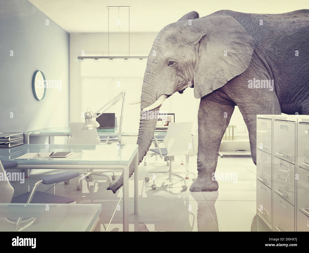 Elephant In The Room Stock Photos & Elephant In The Room Stock ...
