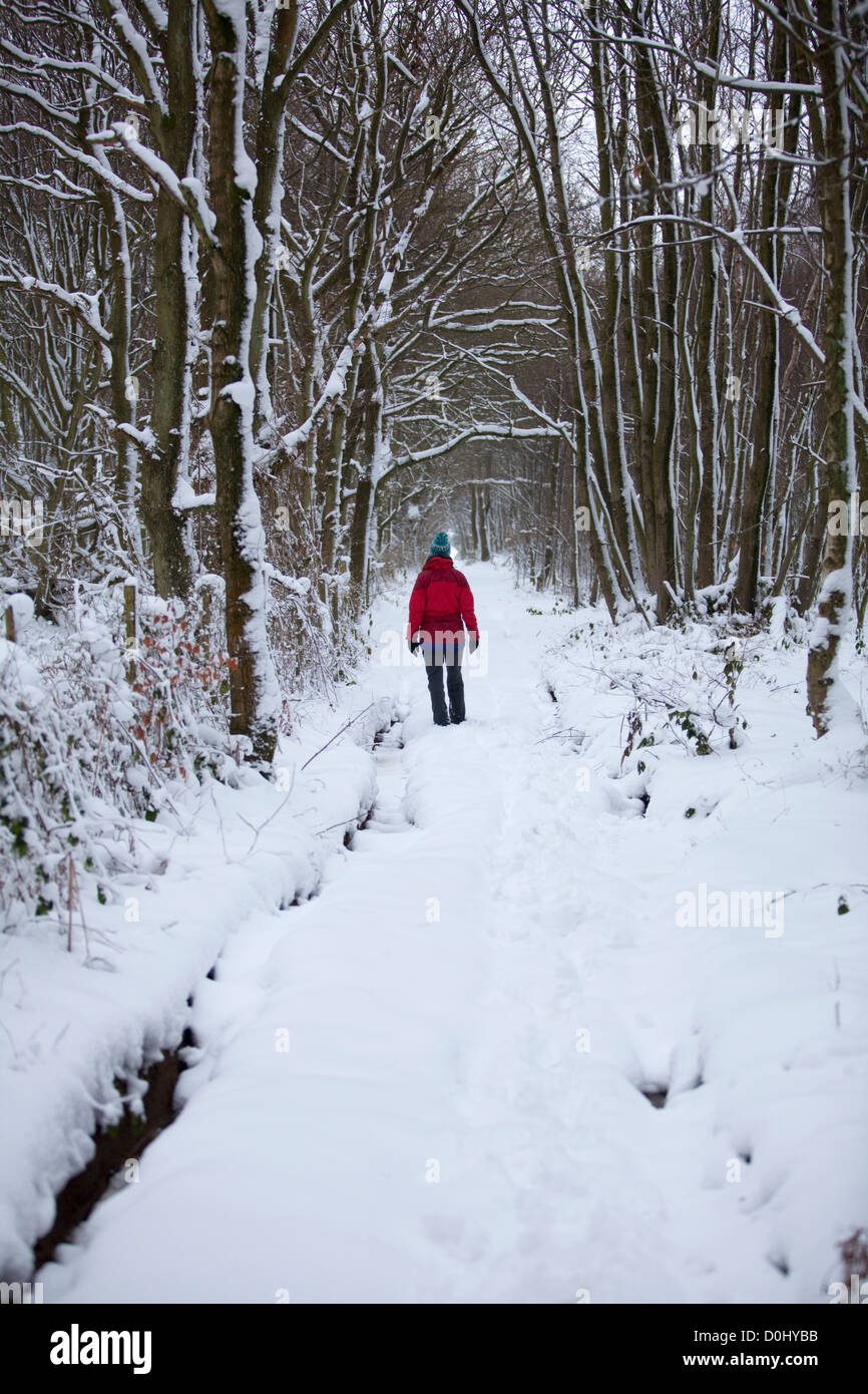 A walker in a red coat amid fresh snow fall in a forest near the village of Stowting in Kent. - Stock Image