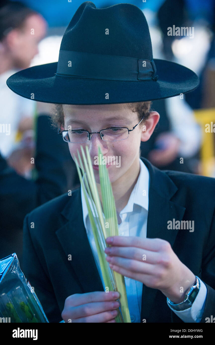 An ultra-orthodox Jewish man inspects an Lulav in the Four species market in Jerusalem Israel - Stock Image