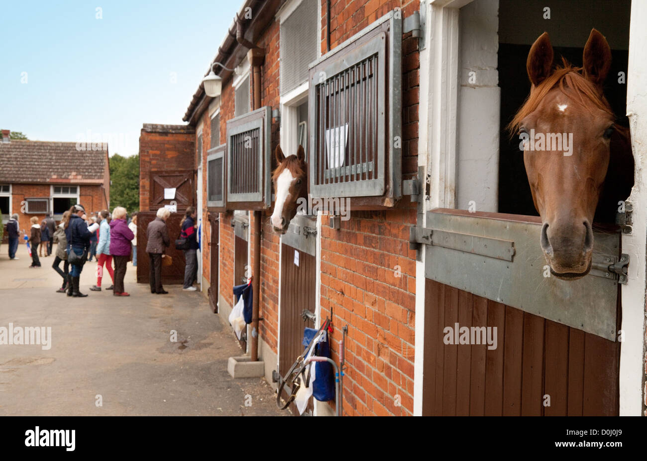 People looking at horses in their stables, Newmarket, Suffolk UK - Stock Image