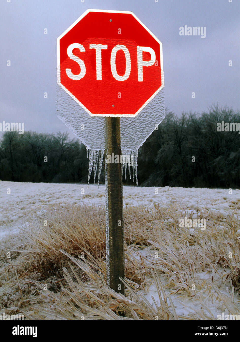 Icicles Dangle From a Stop Sign - Stock Image