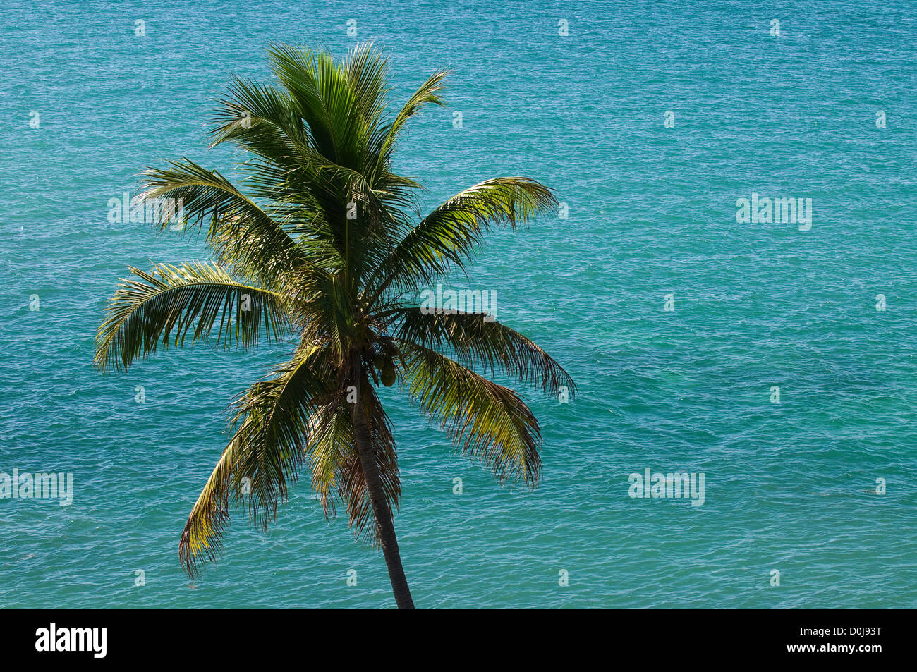 Coconut palm tree and tropical ocean, Bahia Honda State Park, The Florida Keys, Florida - Stock Image
