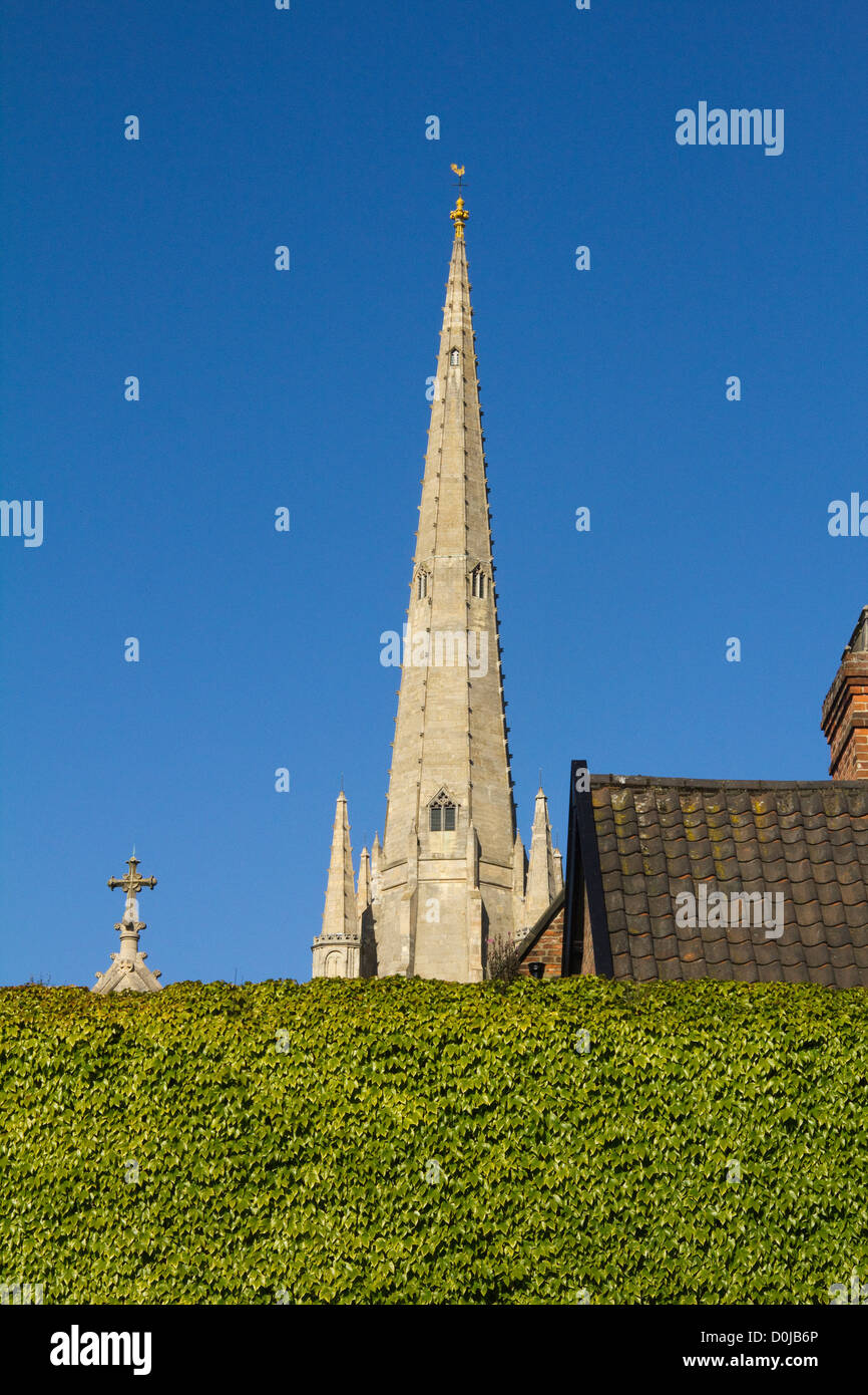 The spire of Norwich Cathedral soars above an ivy-covered wall. - Stock Image
