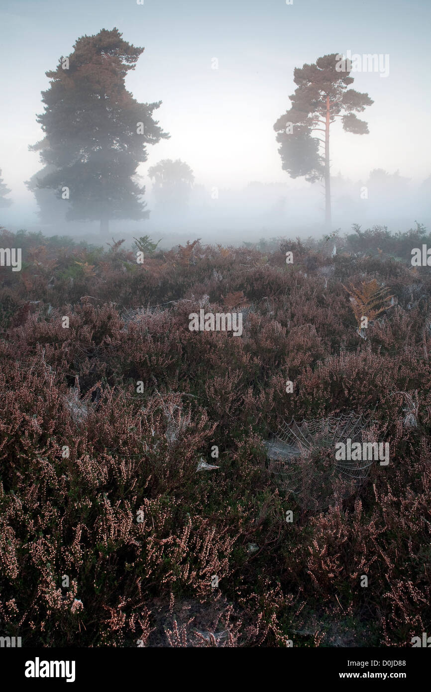 A misty Autumn morning on Hollesley Common in Suffolk. - Stock Image