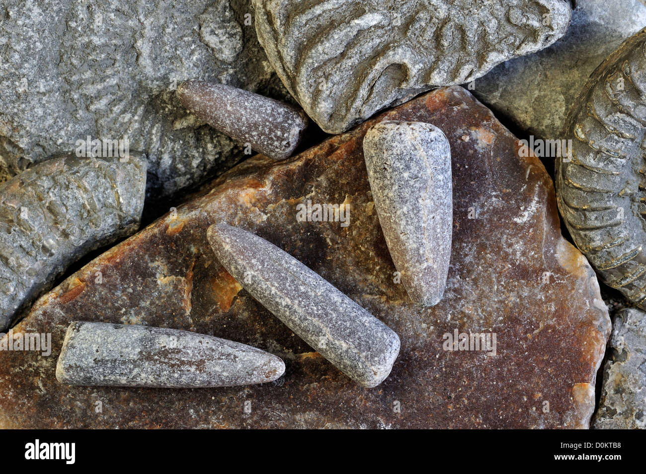 Fossils like fossil guards of belemnites and ammonites on shingle beach near Lyme Regis, Jurassic Coast, Dorset, Stock Photo