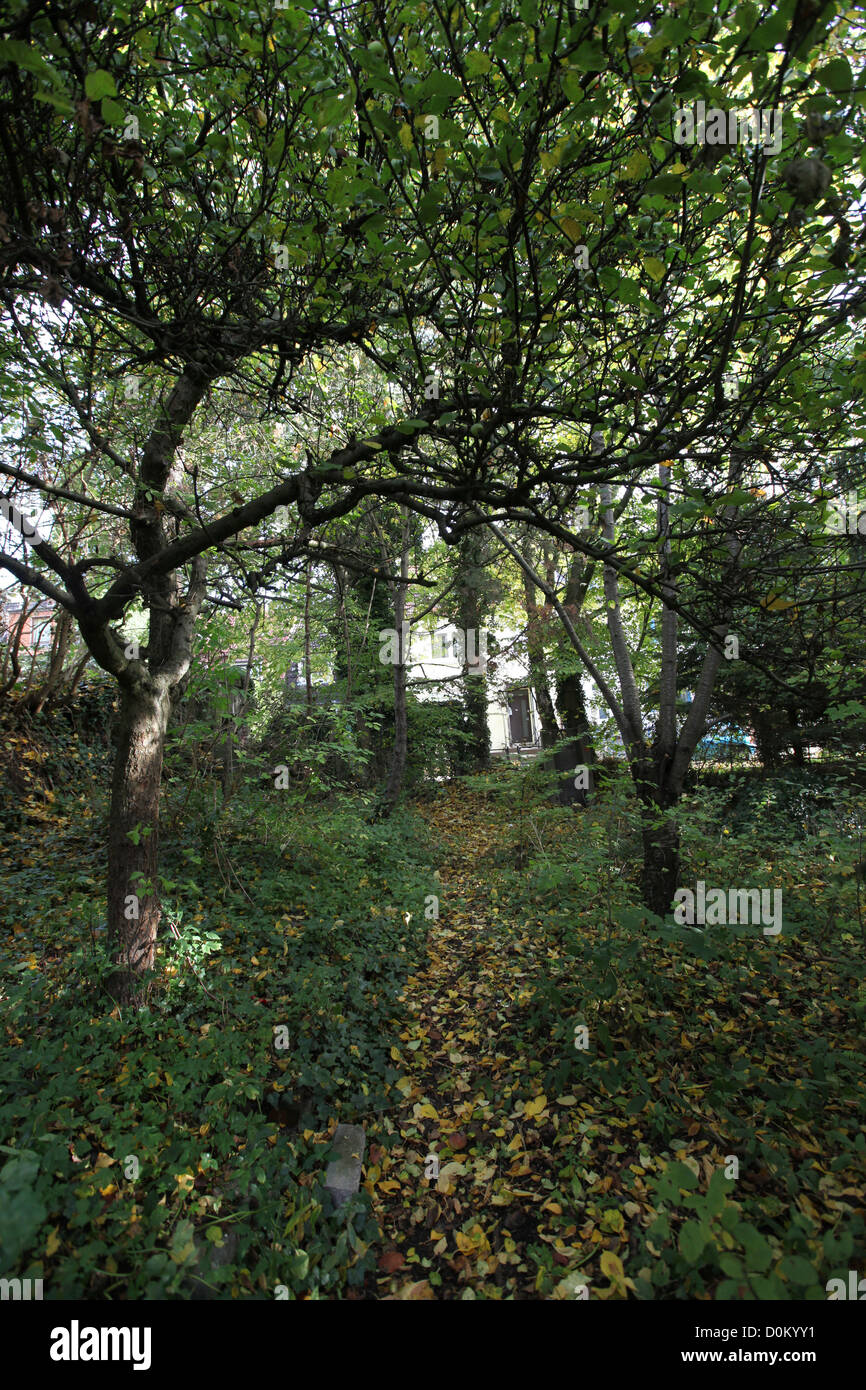Feral urban garden with broadleaf and fruit trees in autumn, Bremen, Germany - Stock Image