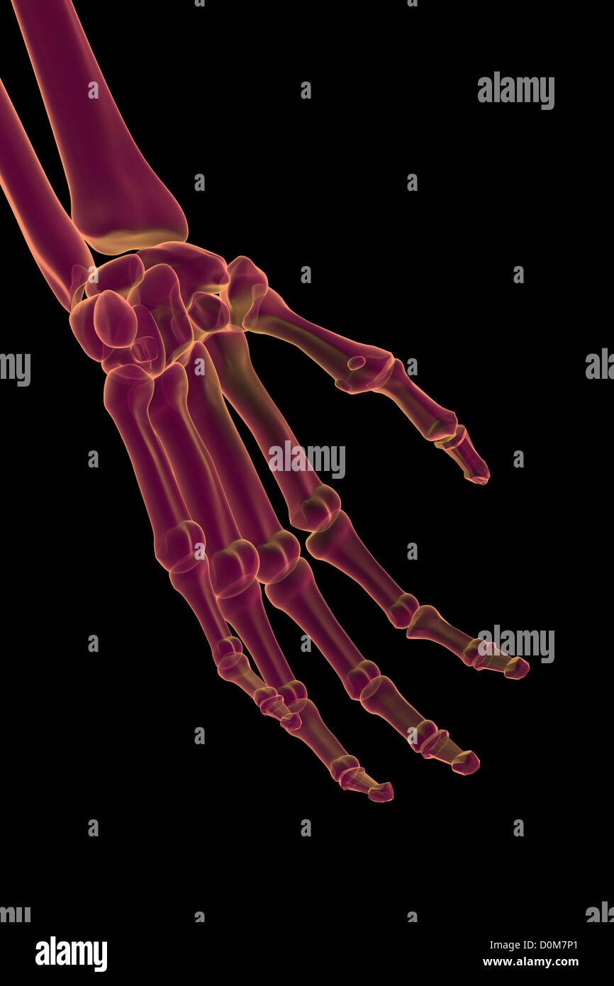 Stylized bones of the left hand and wrist. - Stock Image