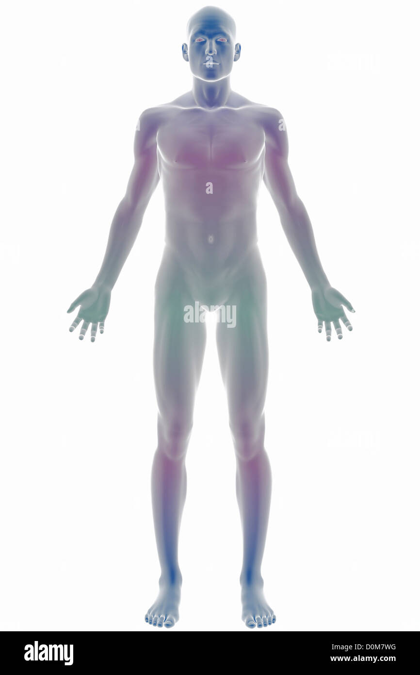 Stylized Front Full Body View Of The Surface Anatomy Stock Photo